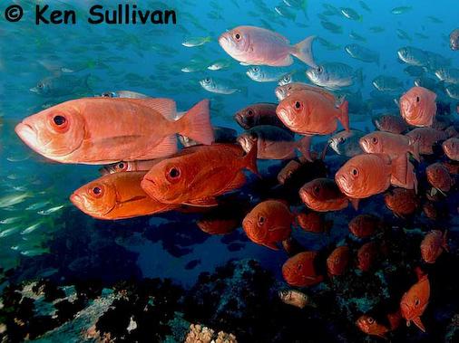 ken_sullivan