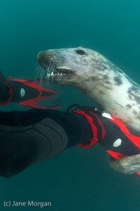 Commended - Seal by Jane Morgan